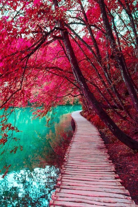 redtreesinawoodpathwaytogreenwater